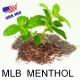 E-liquide goût saveur MB USA MIX menthe pour votre E-cig